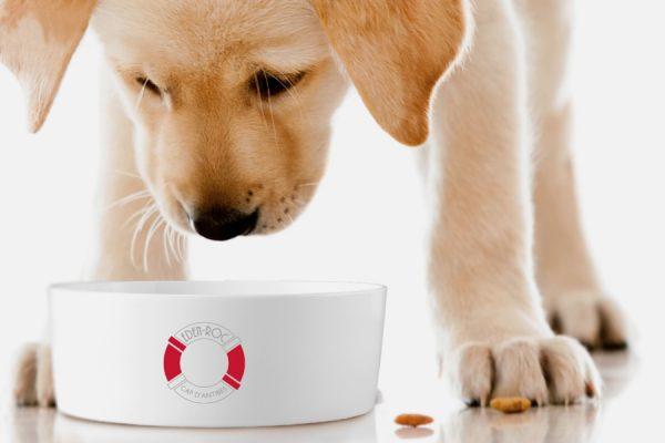 custom porcelain pet feeder, gamelle en porcelaine personnalisable